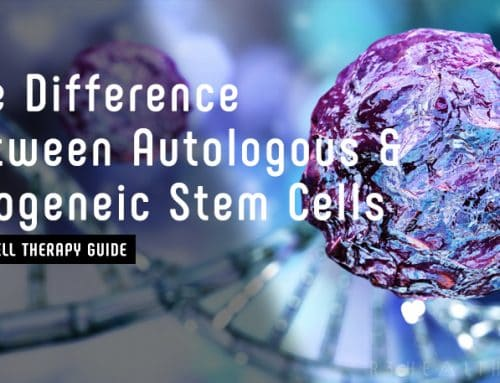The Difference Between Autologous & Allogeneic Stem Cells